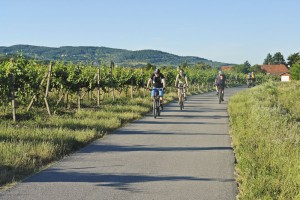 v-racianskych-vinohradoch